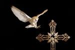 LECHUZA (Tyto alba). Cruz. Cementerio. Vuelo.Recreación en estudio. Ave en cautiverio.Iluminación por flahes.